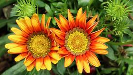 Yaz bahçesine yer örtücü bitkiler