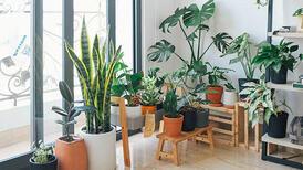 Ev bitkilerine yaz bakımı nasıl yapılır?