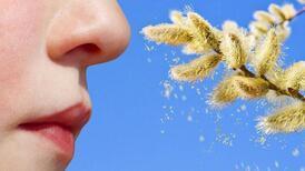 Üzüm otu tehdidi yaygınlaşıyor! Bu güçlü alerjen...