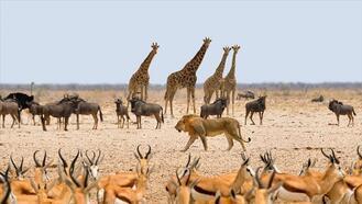 Kayseri milyonlarca yıl önce Afrika gibiydi