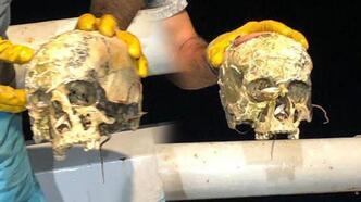 Korkunç manzara! Ağa insan kafatası takıldı