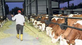 Sütte üretim azalıyor yumurta pazar arıyor