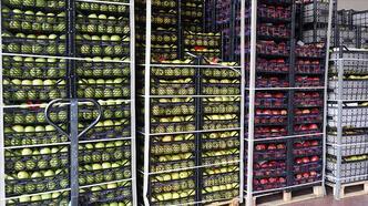 Rusya'ya yaş meyve sebze ihracatı kazandırıyor