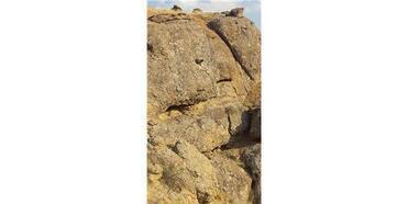 Kurtlardan Kaçarak Kayalıklarda Mahsur Kalan Koyunu, İtfaiye Ekipleri Kurtardı