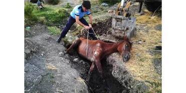 Çamura Saplanan Atı İtfaiye Kurtardı