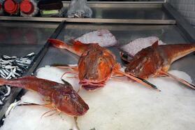 5 kiloluk kırlangıç balığı, 500 TL'ye satılıyor