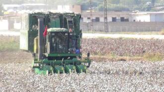 Pamuk üreticilerine uyarı: Üst üste aynı ürün ekenlere destekleme verilmeyecek