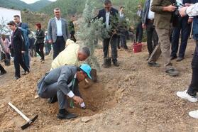 Alaşehir'de 2 bin fidan dikildi
