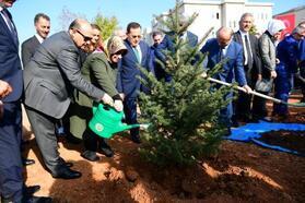 Trabzon'da sabun ağacı fidanları toprakla buluşturuldu