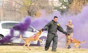 Öğretmenler JAKEM'de köpeklerin gösterisini izledi