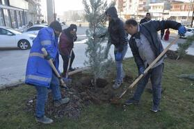 Siverek'te ağaç dikimine başlandı