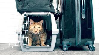 5 soruda evcil hayvanla seyahat