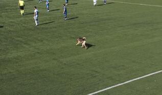 Tunceli'de sahaya köpek girdi, maç durdu