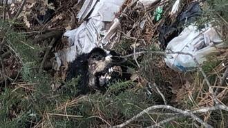 Çöplükte 20 köpek ölüsü bulundu