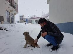 Soğuk havadan etkilenen sokak köpeğinin bakımını yaptı