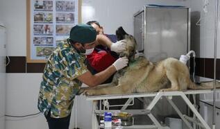 Tasması boynunu kesen köpek tedavi edildi