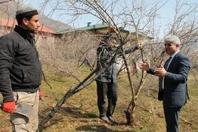 Bitlis'te ağaç budama sezonu başladı