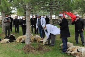 Kayseri'de koronavirüs salgını için kurban kesildi