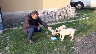 Karakoçan'da, sokak hayvanları unutulmadı