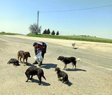 Jandarma, sokak hayvanlarını besledi