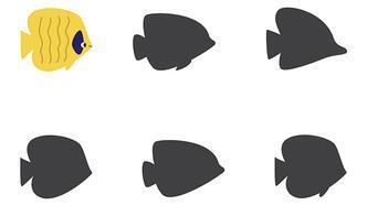 Gölge bulma oyunu: Sarı balığın gölgesi hangisi?