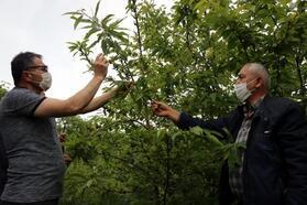 'Katil' gal arısı, Zonguldak'ta da görüldü