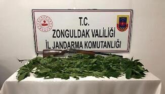 Serada uyuşturucu yetiştiren iki kişiye gözaltı