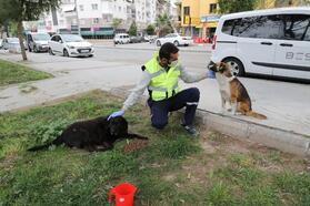 Sokak hayvanları için 'bir kap su' kampanyası