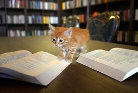 Kedili Tekke'de okuma etkinliği düznlendi