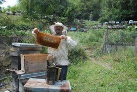 Aşırı yağışlar kestane balı üretimini etkiledi