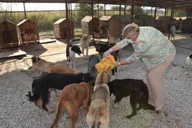 Başkan Erdem hayvan barınağında besleme yaptı