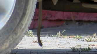 Antalya'da otomobile giren yılan zor anlar yaşattı!