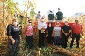 Boş arsada yetiştirilen mısırlar hasat edildi