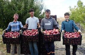 Yaylada elma hasadı başladı