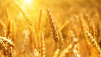 Tarım Ekonomisi Bölümü Nedir, Dersleri Nelerdir? Mezunu Ne İş Yapar?
