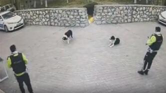 Malatya'da ayağından tüfekle vurulan köpeği polis ekipleri sahiplendi
