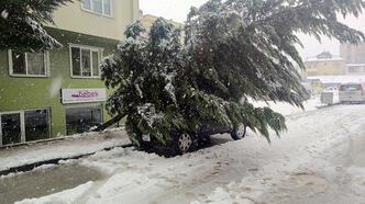 Kar yağışına dayanamayan ağaç cipin üzerine devrildi