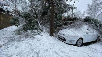 Kartal'da ağaç devrildi, belediye ekipleri müdahale etti