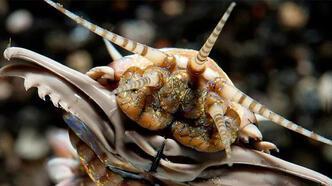 20 milyon yıllık dev solucan yuvası keşfedildi