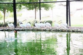 Tarsus doğa parkı yarıyıl tatilinde öğrenciler için ücretsiz