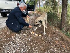 Kadirli Belediyesi, sokak hayvanları için yaylalara yem bıraktı