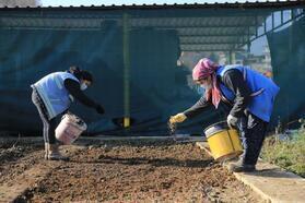 Pamukkale Belediyesi süs bitkilerini kendi yetiştiriyor
