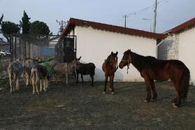 Ordu'da sokağa terk edilen hayvanlar koruma altında