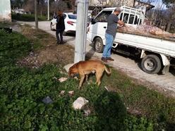 Sokak hayvanları unutulmuyor
