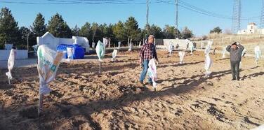 Nevşehir'de meyve fidanlarında çuvallı soğuk önlemi