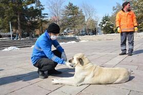 Yaralı köpek koruma altında