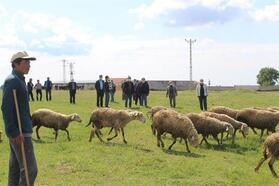 Trakya, koyun keçi vebası hastalığından korunmuş bölge ilan edildi