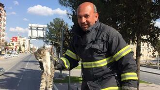 Ağaçta mahsur kalan yavru kedi kurtarıldı