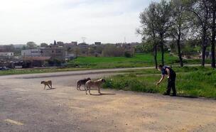 Süleymanpaşa'da sokak hayvanlarını zabıta ekipleri besliyor