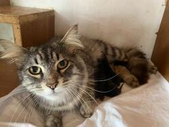Nilüfer'de yavru kedi kurtarma operasyonu